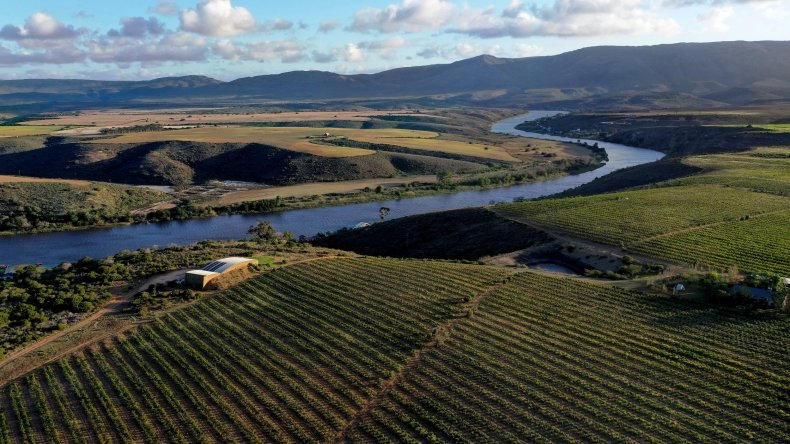 Wine vineyards Western Cape South Africa 2020