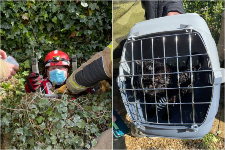 Cat trapped in well rescued by dog