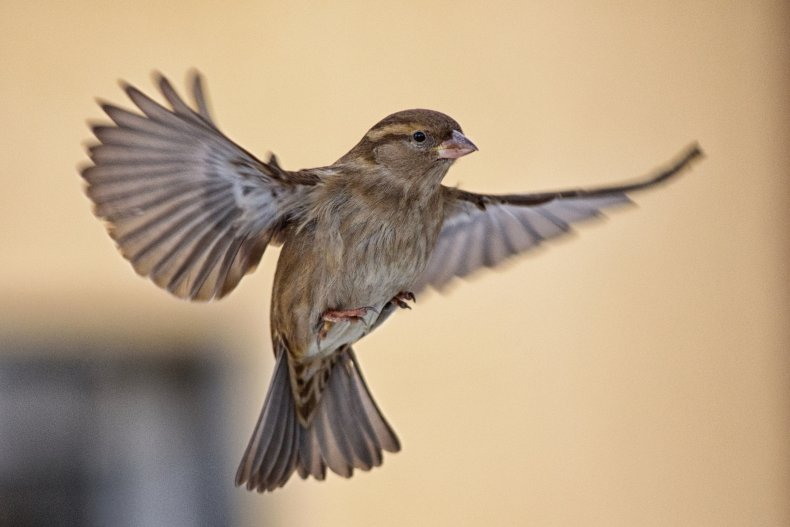 Stock image of a sparrow