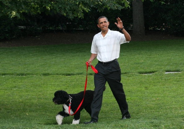 Tributes Pour in for Obama's Dog Bo, After Former First Dog Passes Away