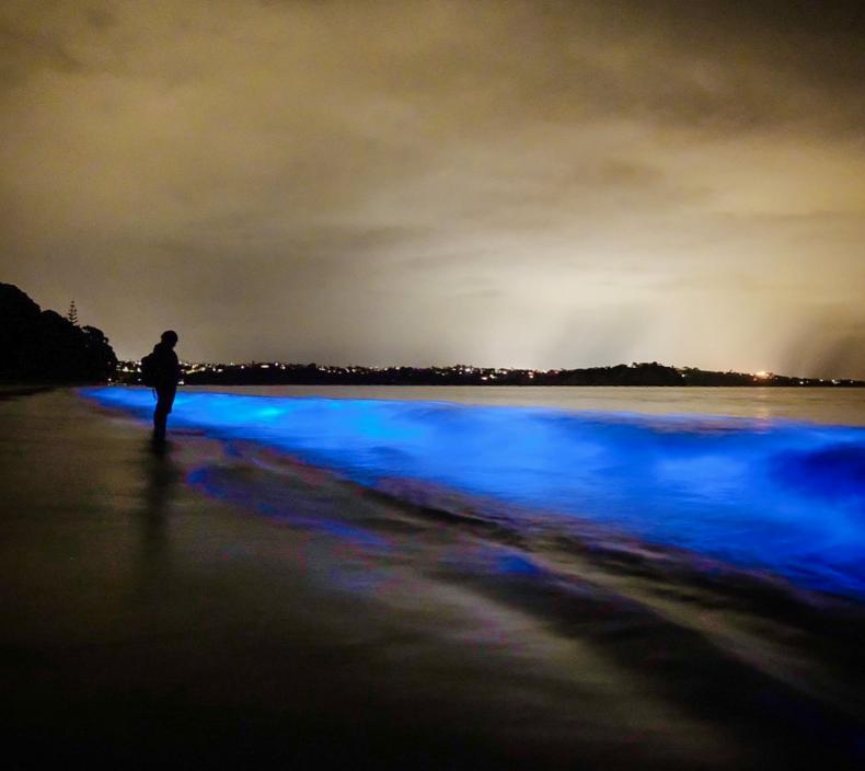 Bioluminescence on Tindalls Beach