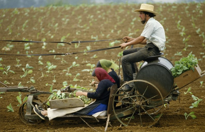 Amish family working