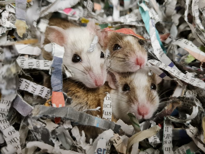 mice rescued home