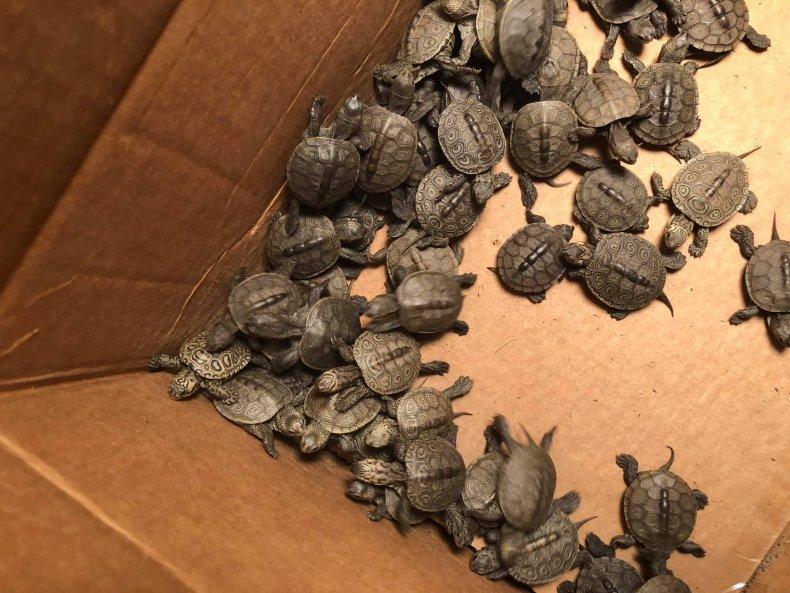 Turtle rescue NJ College