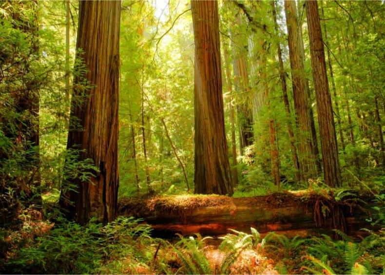 #43. Redwood National Park