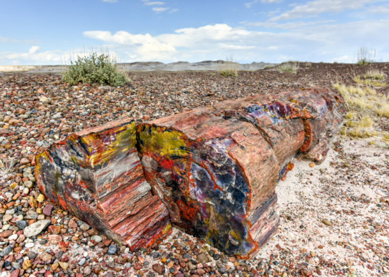 #38. Petrified Forest National Park