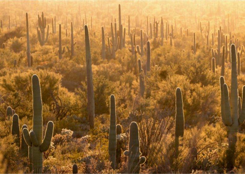 #24. Saguaro National Park