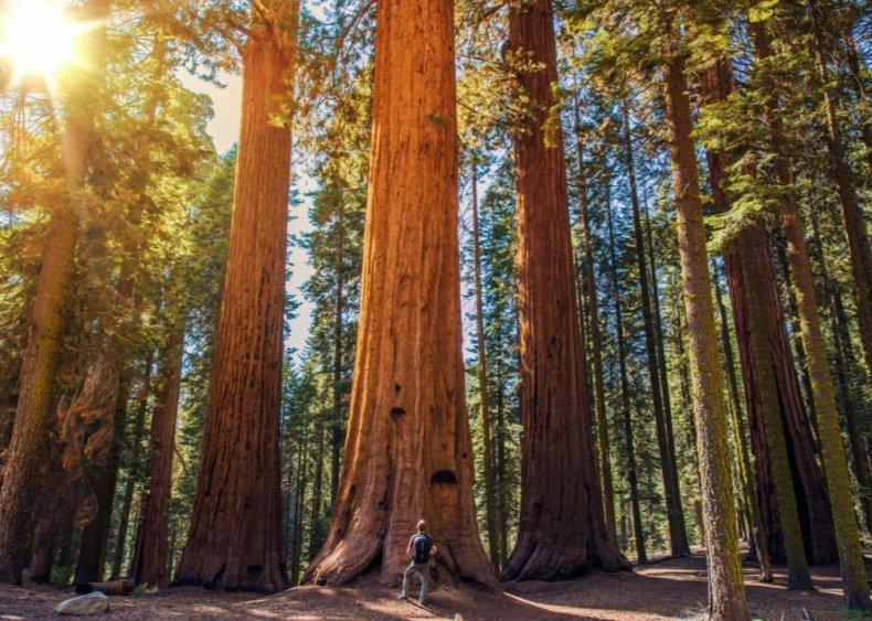 #23. Sequoia National Park