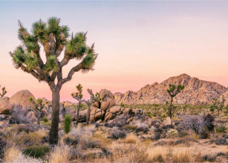 #10. Joshua Tree National Park