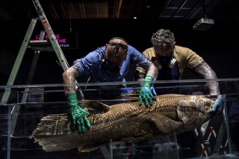 'Extinct fossil fish' found alive