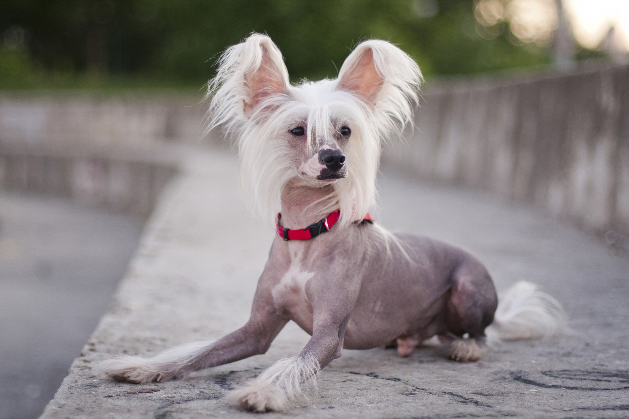 20 Dog Breeds That Don't Need a Lot of Exercise