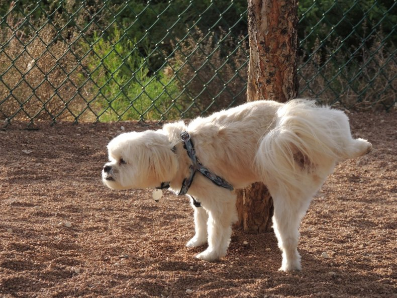 tips to help potty train dogs