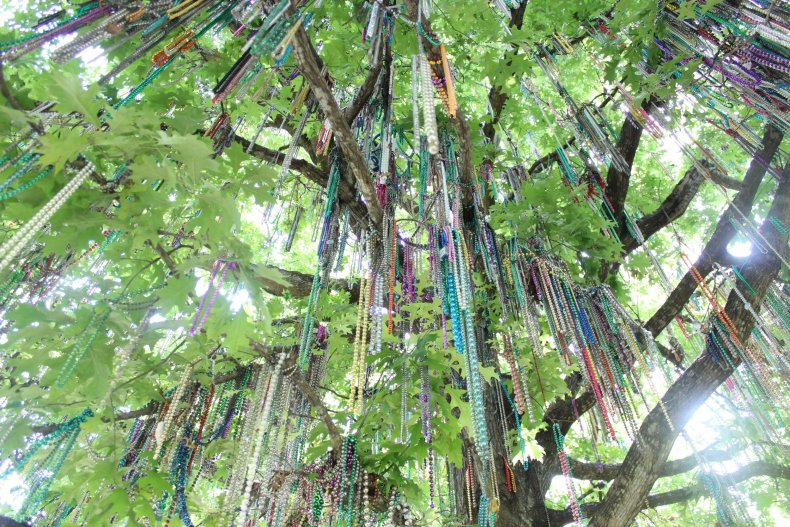 Tulane Tree