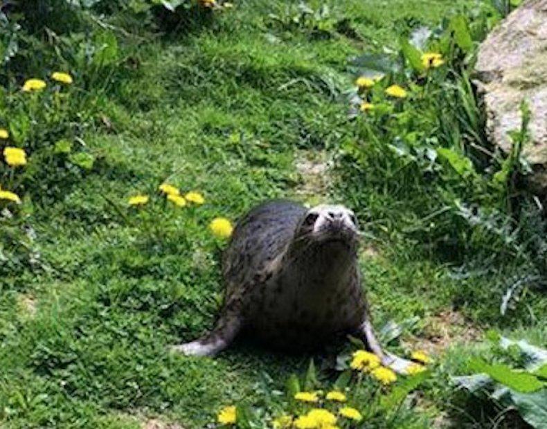 atria seal pup, seal rescue ireland