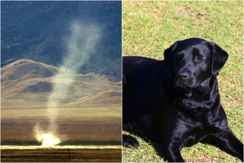 Dog lifted into air by dust devil