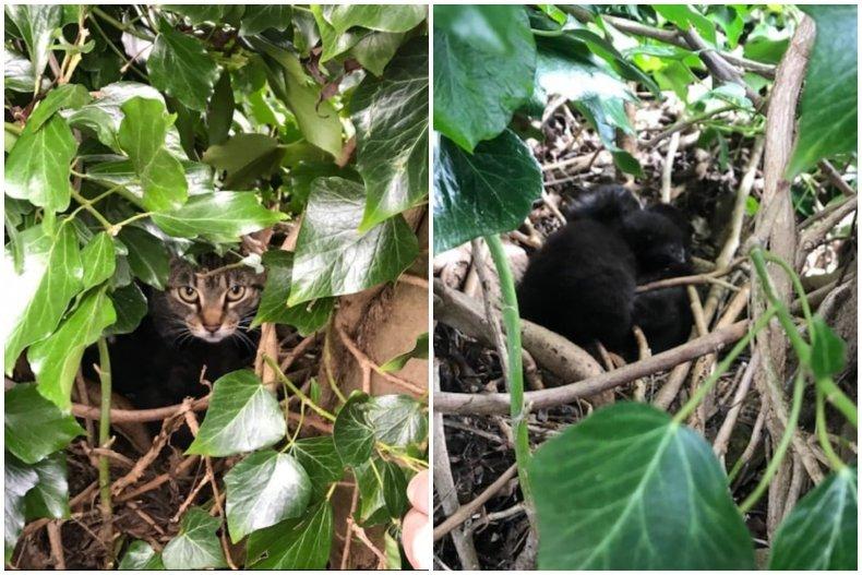 Cats Found in Nest