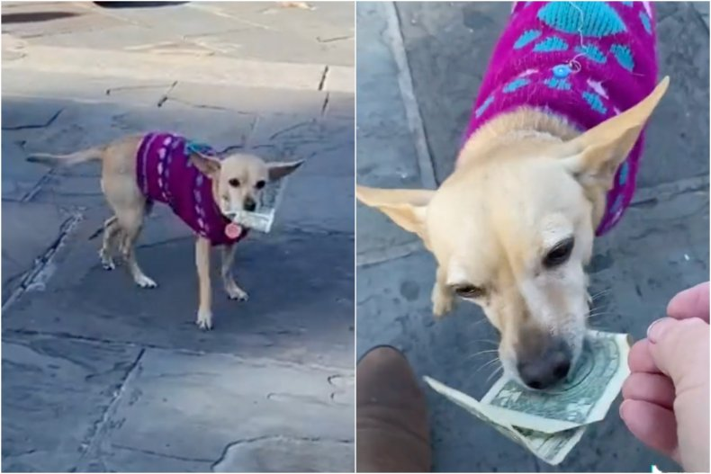 Dog Charms Audience While Collecting Tips
