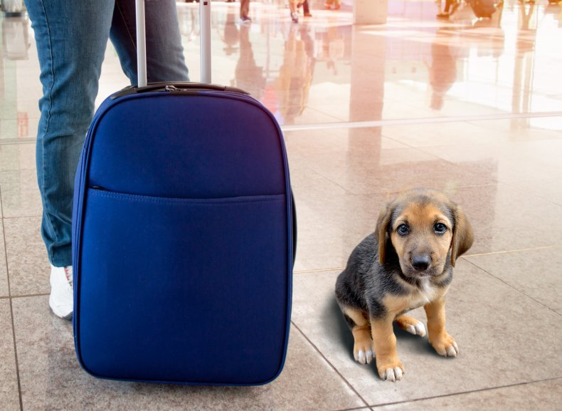 A dog and a suitcase at airport.