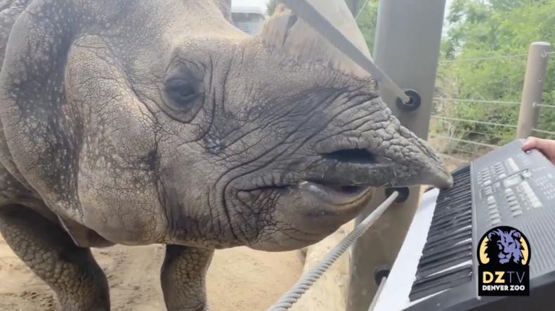 Rhino Plays His Own Happy Birthday Tune