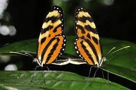 Butterflies at National Butterfly Center