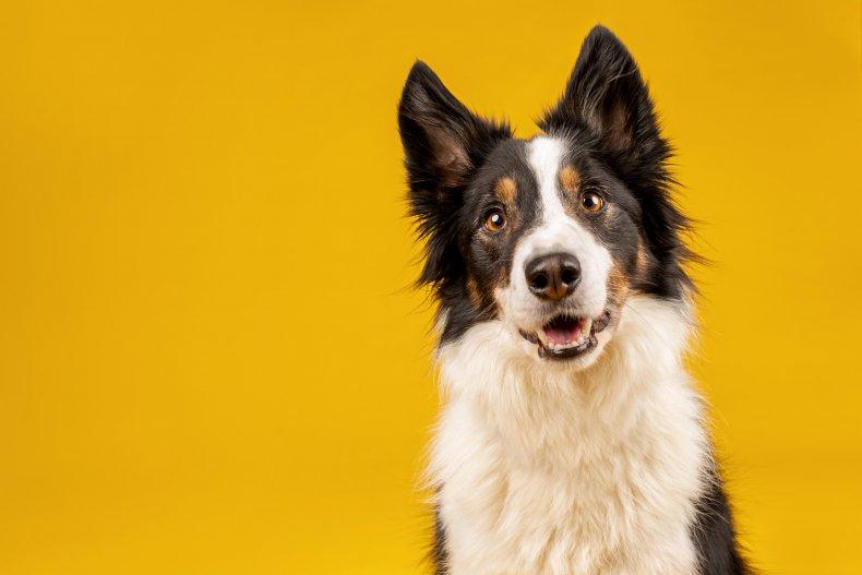 Dog looking suprised