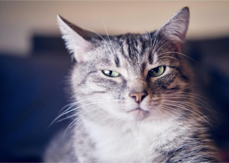 Why is my cat suddenly not using the litter box?