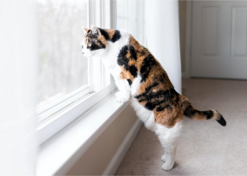 Why does my cat 'chirp' when looking out the window