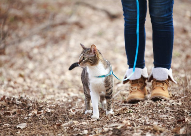 Can I walk a cat on a leash?