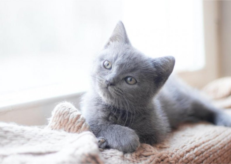 What vaccinations do kittens need?