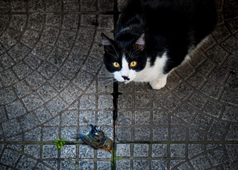 Why do cats leave dead animals on the doorstep?