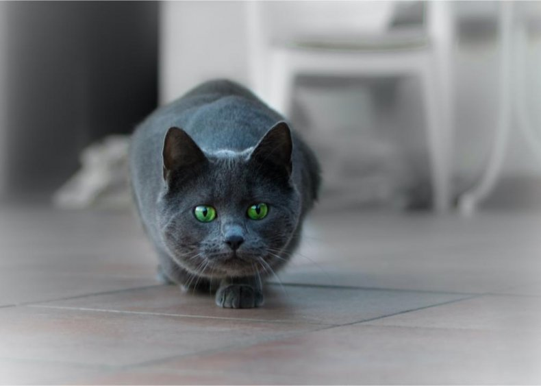 Just how efficient are cats as hunters?