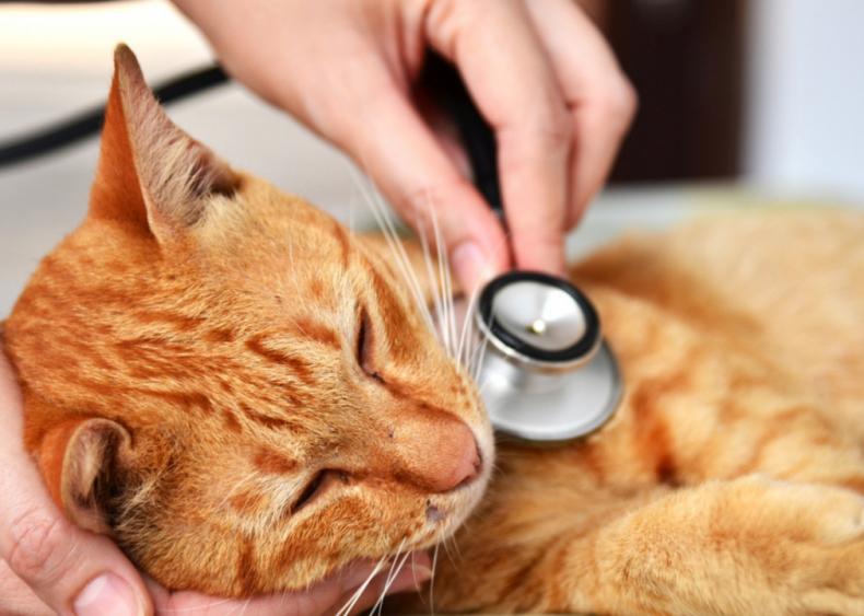 Should I worry about feline leukemia?
