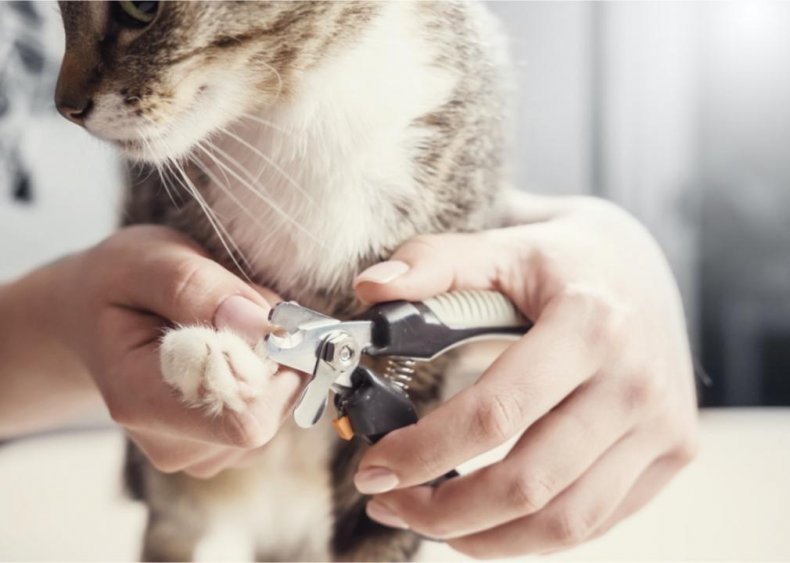 Do I need to cut my cat's nails?