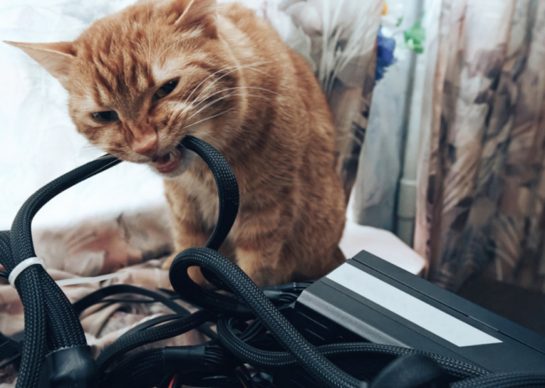 My cat won't stop eating my wires. What should I do?