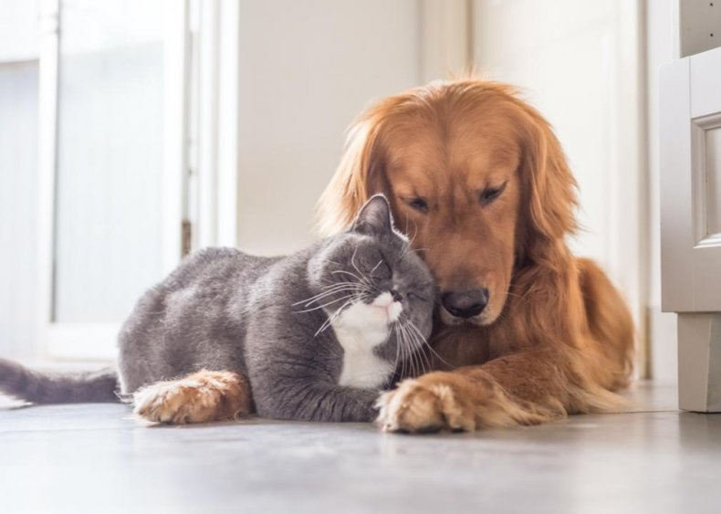 Can cats transmit diseases to my other loved ones?