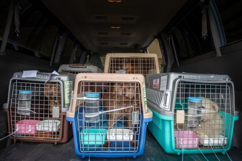 Resced dogs in LA