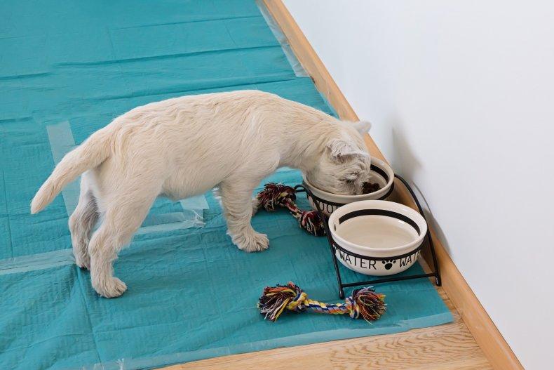 Florida woman soiled dog poop pads Windex