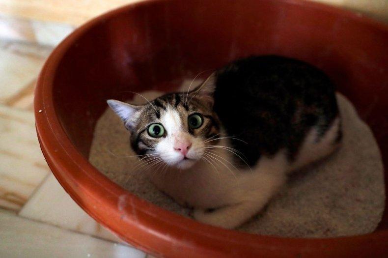 Abandoned cat in Lebanon shelter