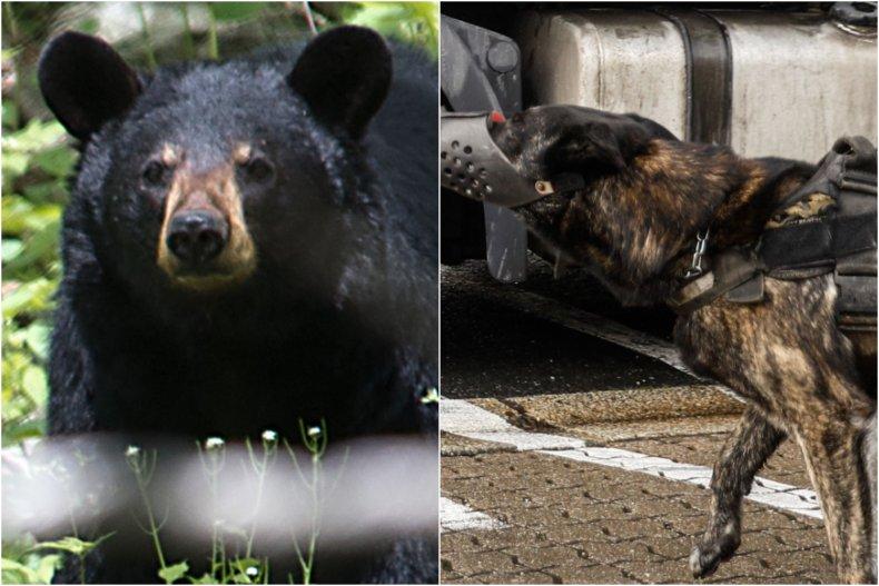 Black bear scared off by brave dog