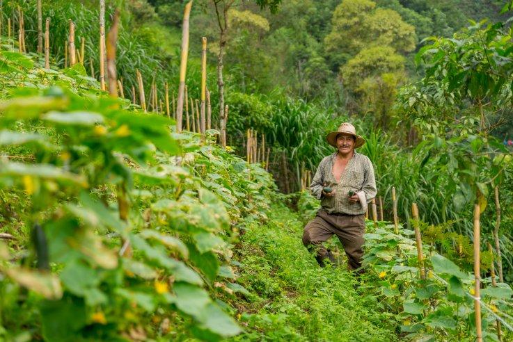El agricultor guatemalteco Enrique Samayoa