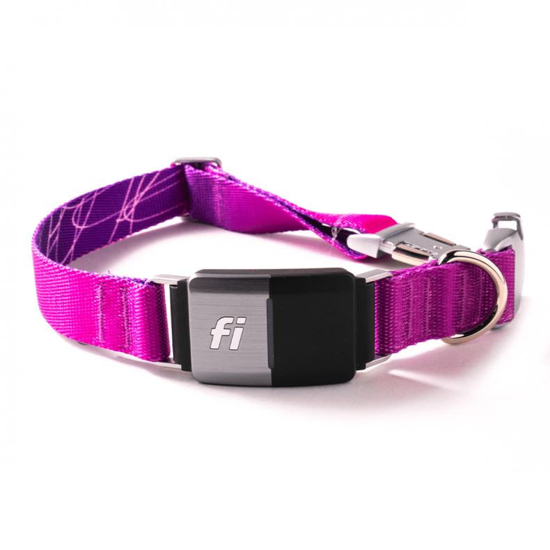 best dog collars for puppies fi