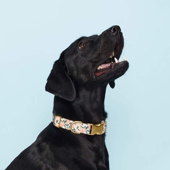 best dog collars for puppies