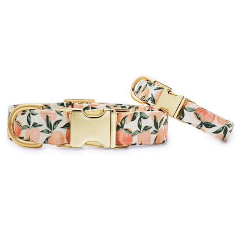best dog collars for puppies foggy dog