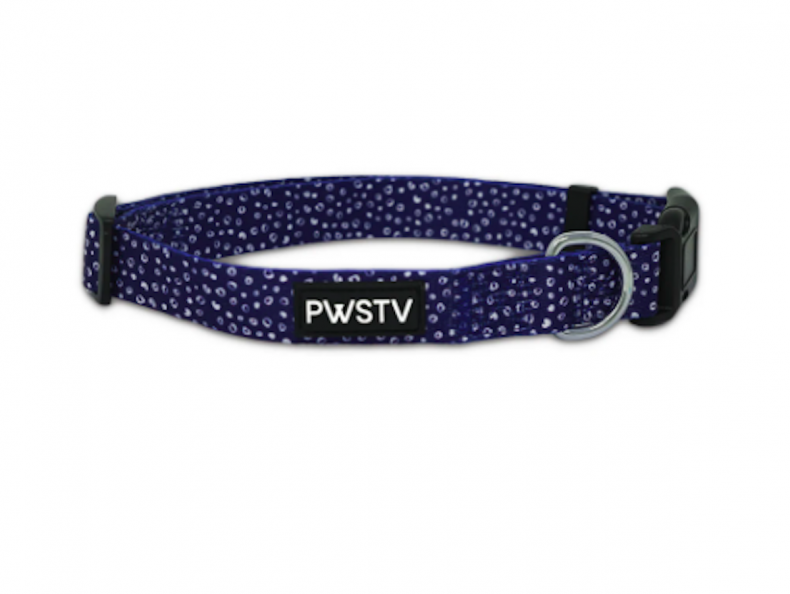 best dog collars for puppies pawsitive co