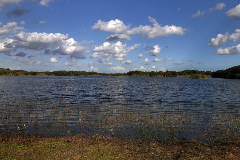 A pond at Florida's Everglades National Park.