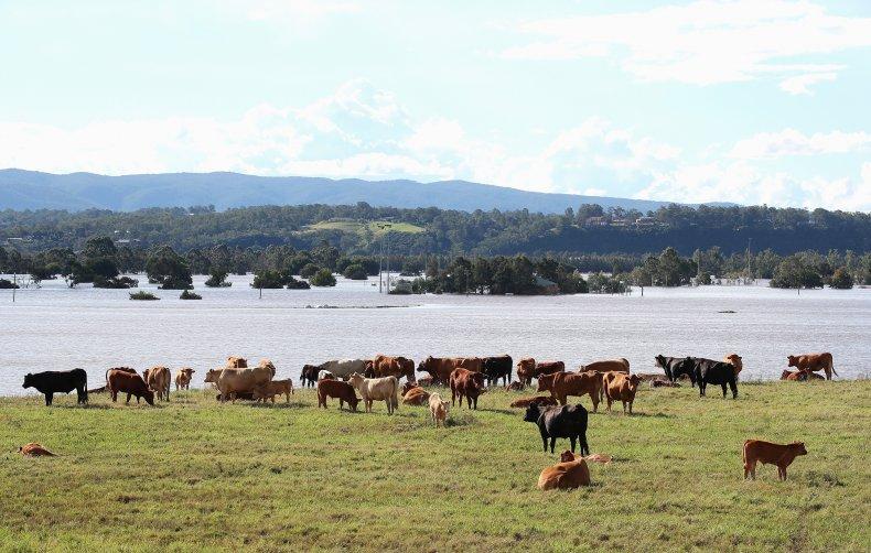 New South Wales Australia Farm