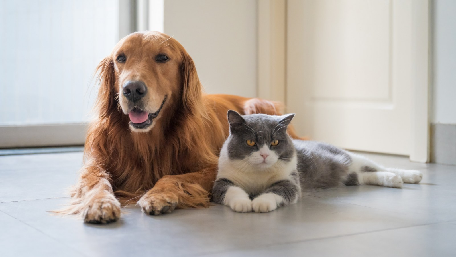 Cat 'Becomes a Dog' by Copying Its Behavior in Adorable Video