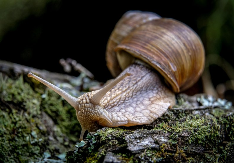A Snail Crawls in a Nature Reserve