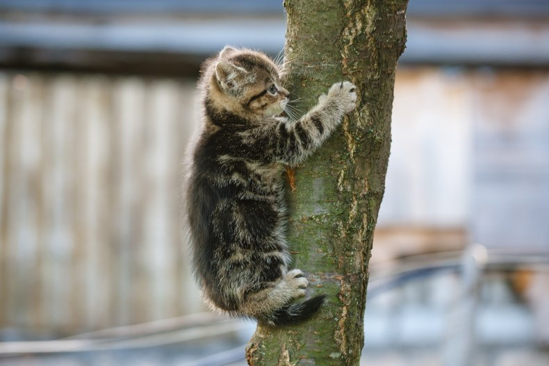 Cat Tree Rescue Fire Department Tree Service