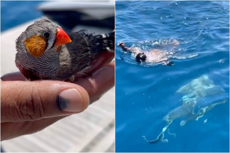 Man jumps in shark-infested water, saves bird